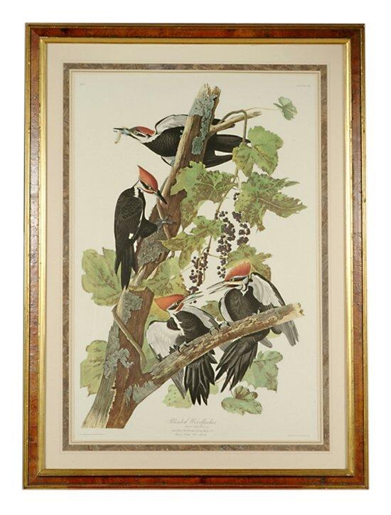 501: 1 piece. Color Bird Print. Audubon, J.J.