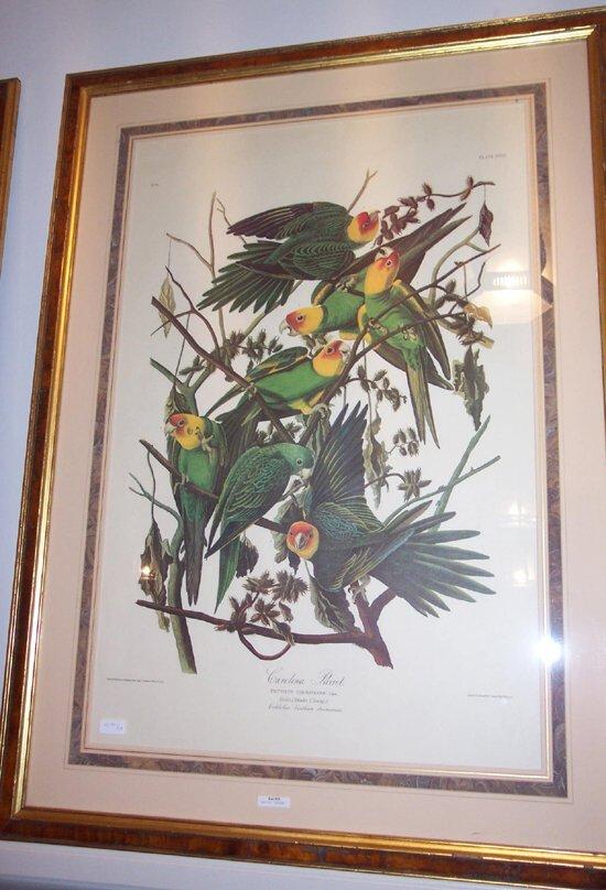503: 1 piece.Color Bird Print. Audubon, J.J.
