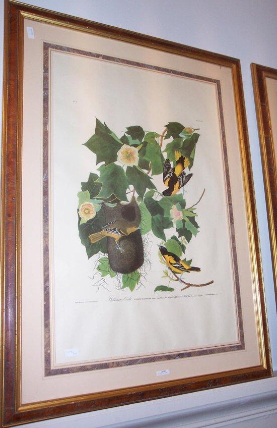 "505: 1 piece. Audubon Bird Print. ""Baltimore"