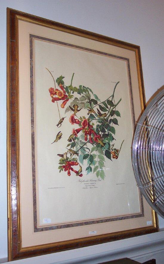 506: 1 piece. Color Bid Print. Audubon, J.J.