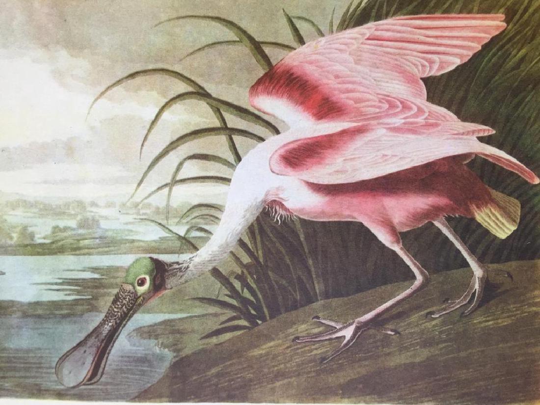 c1946 Audubon Print, #321 Roseate Spoonbill
