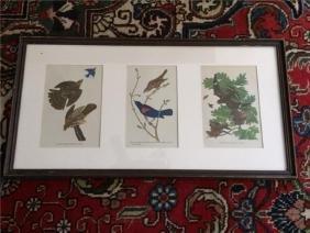 1946 Audubon Framed Bird Prints