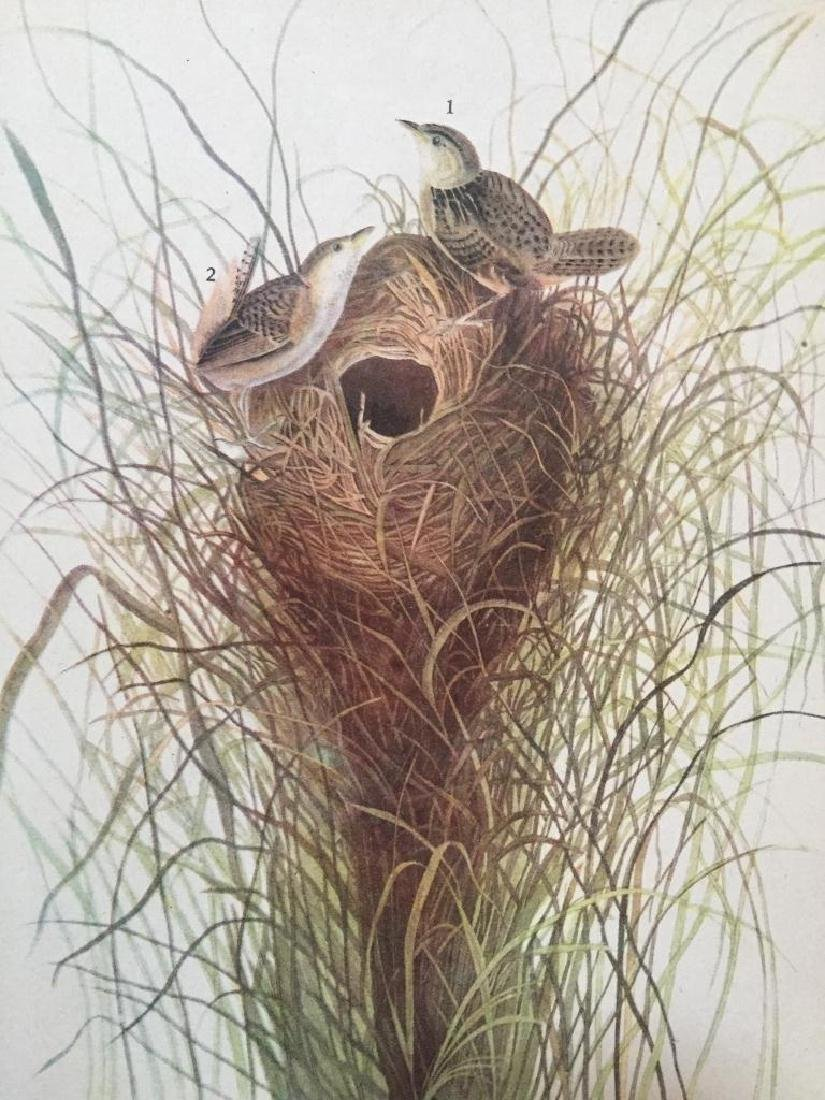 c1946 Audubon Print, #175 Short-Billed Marsh Wren