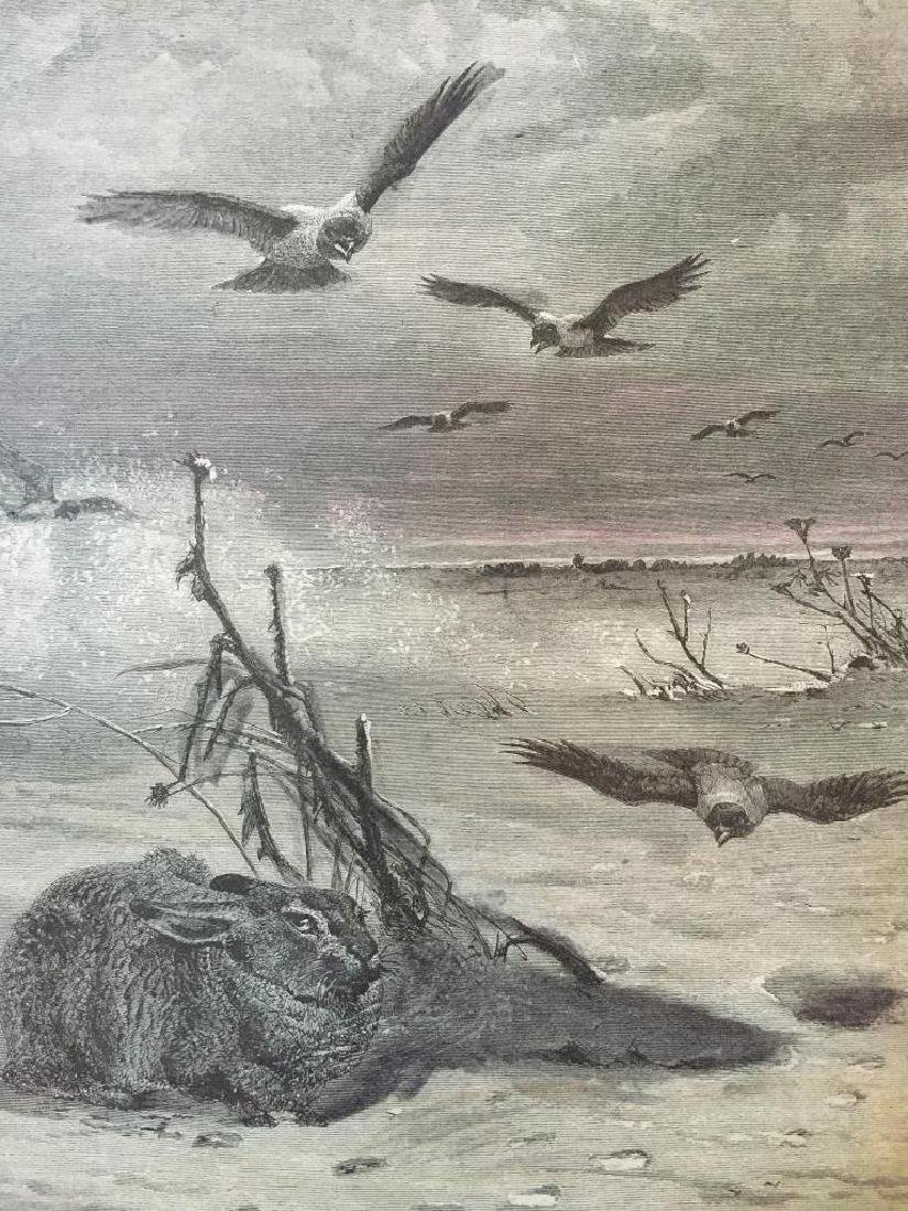 19thc Engraving, Rabbit Hunted by Hawks