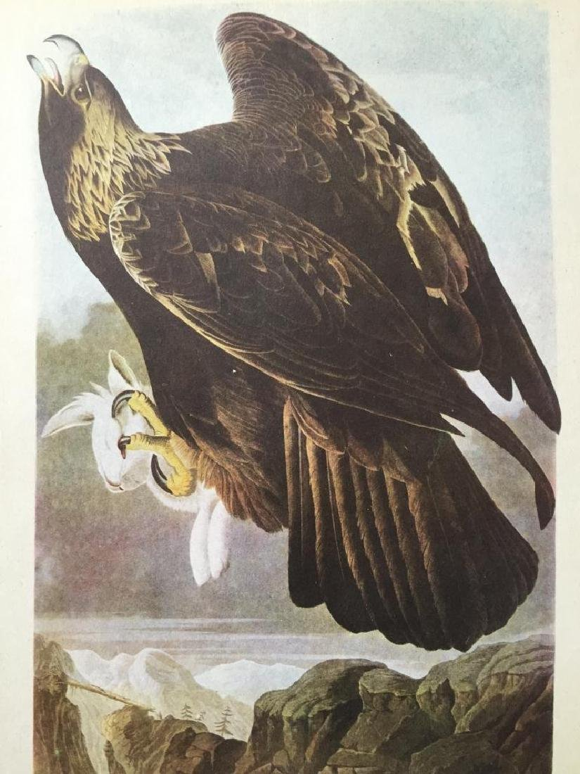 c1946 Audubon Print, #181 Golden Eagle