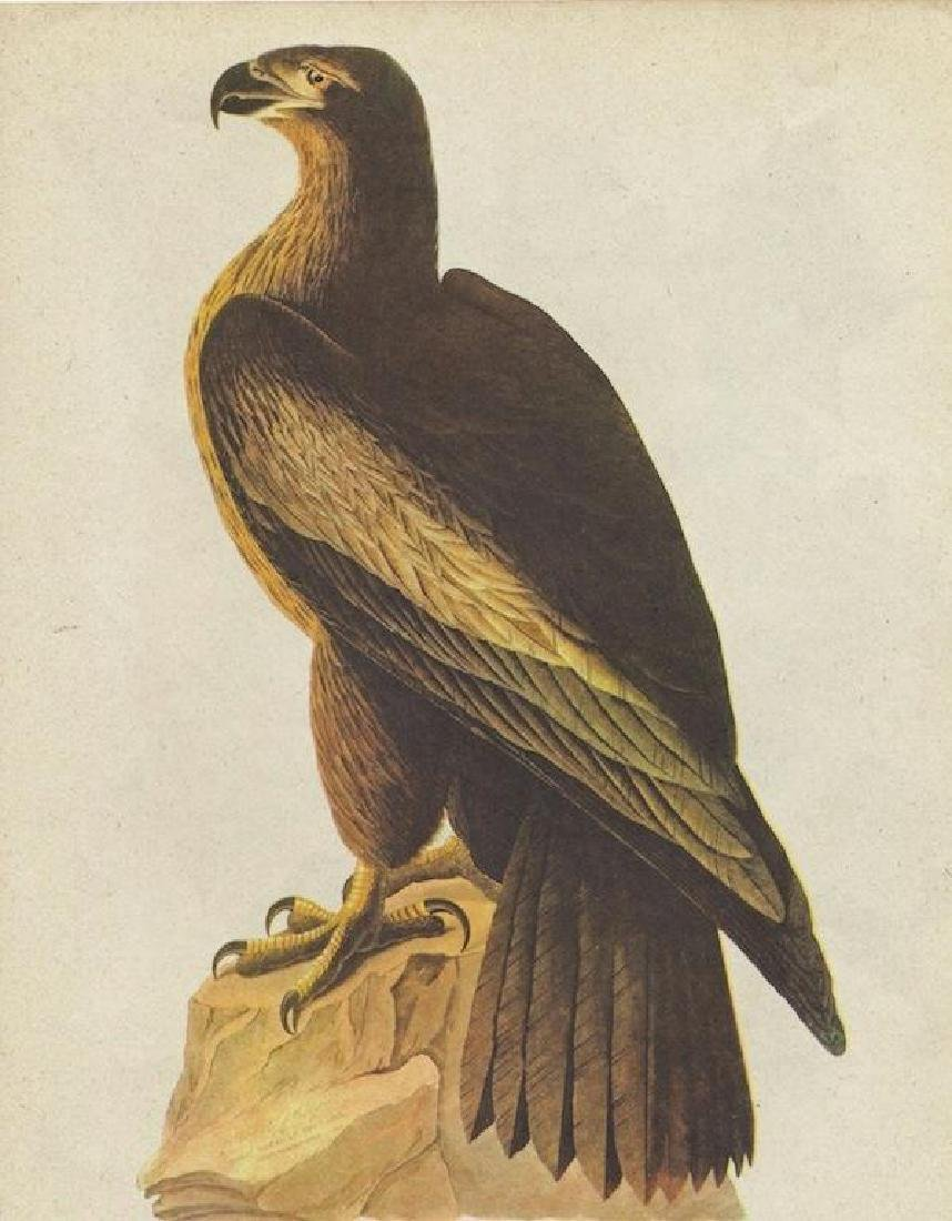 Vintage Audubon Print, Bald Eagle