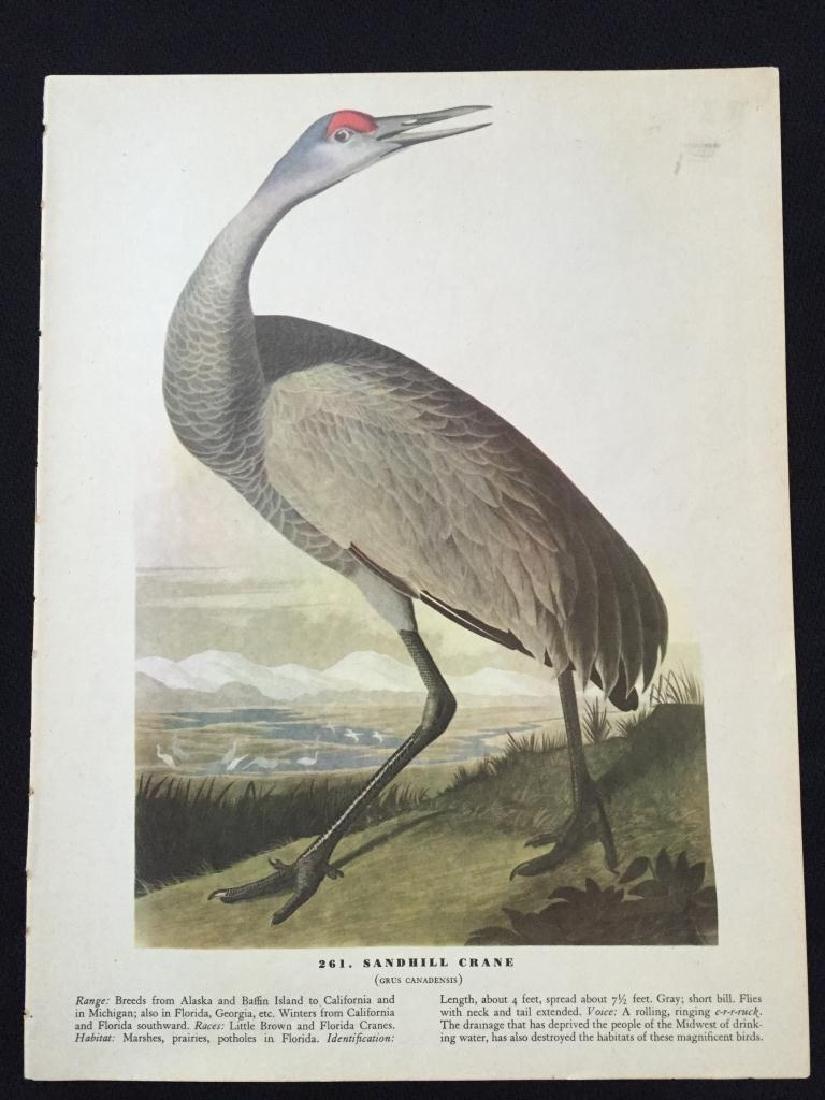 c1946 Audubon Print, #261 Sandhill Crane - 2
