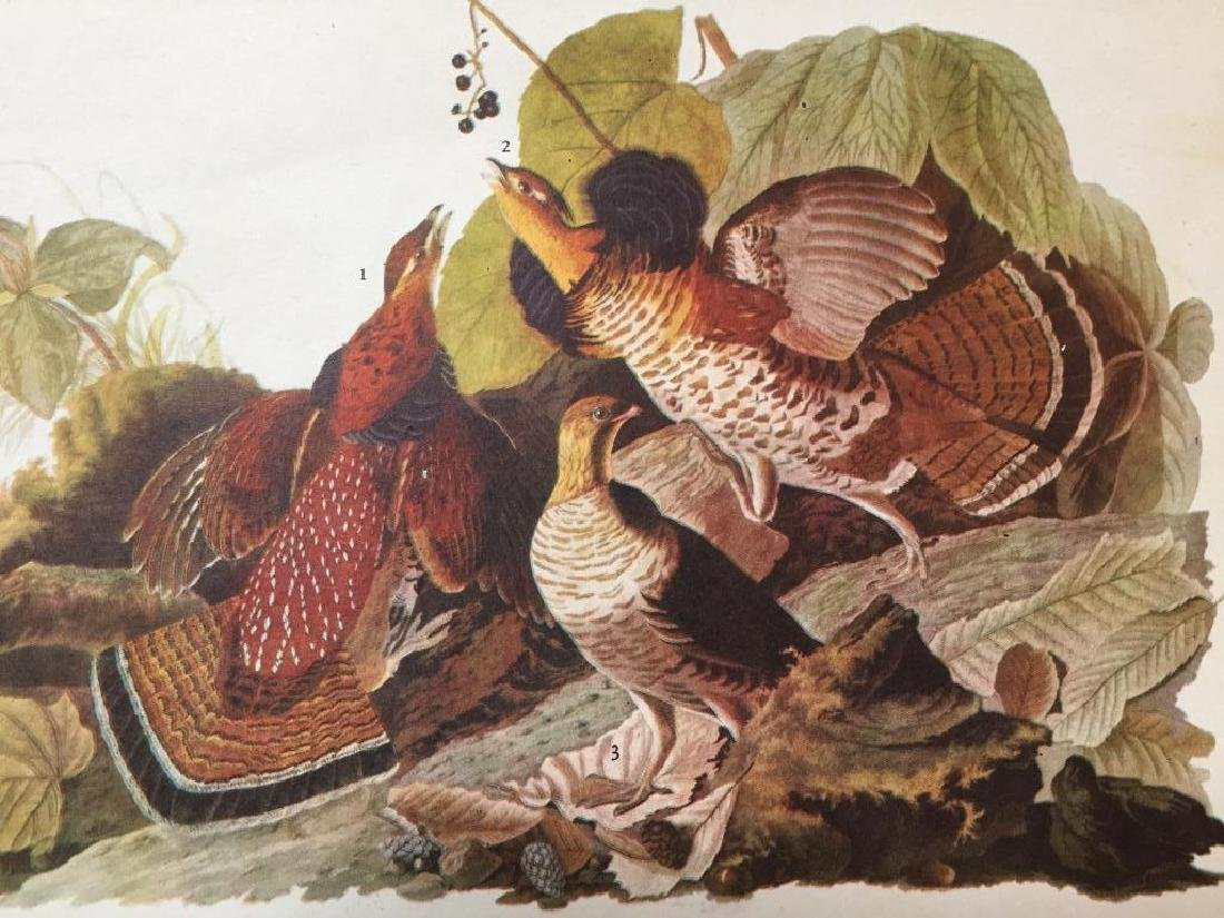 c1946 Audubon Print, #41 Ruffed Grouse