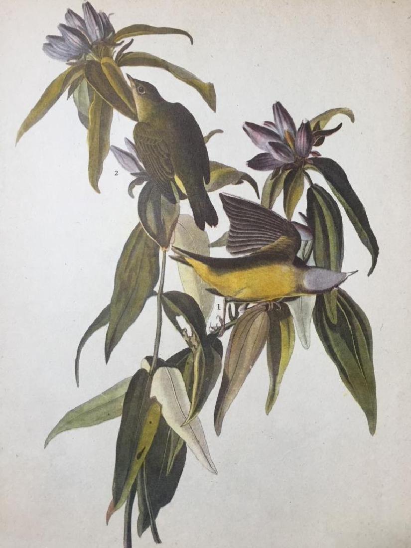c1946 Audubon Print, #138 Connecticut Warbler