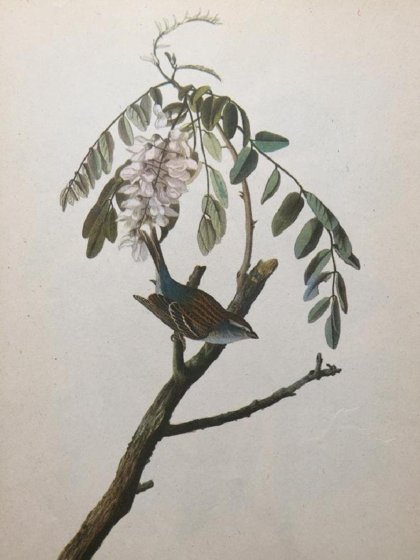 c1946 Audubon Print, #104 Chipping Sparrow