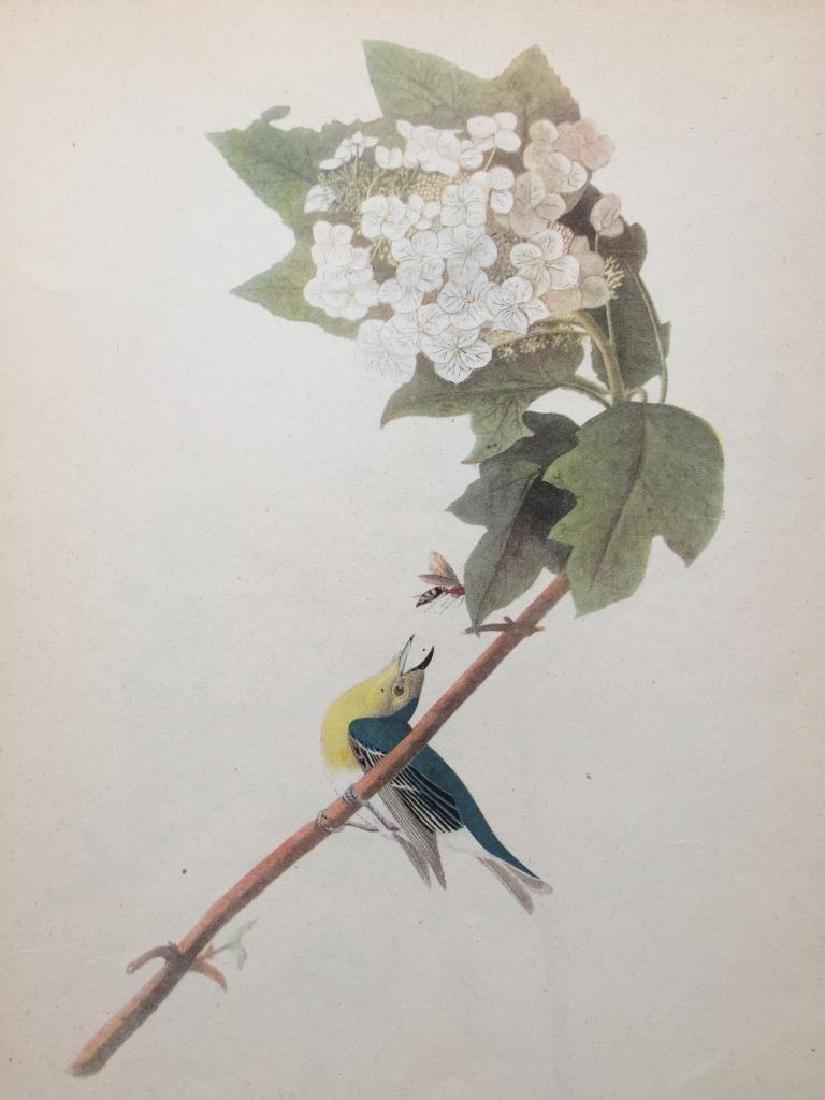 c1946 Audubon Print, #119 Yellow-Throated Vireo