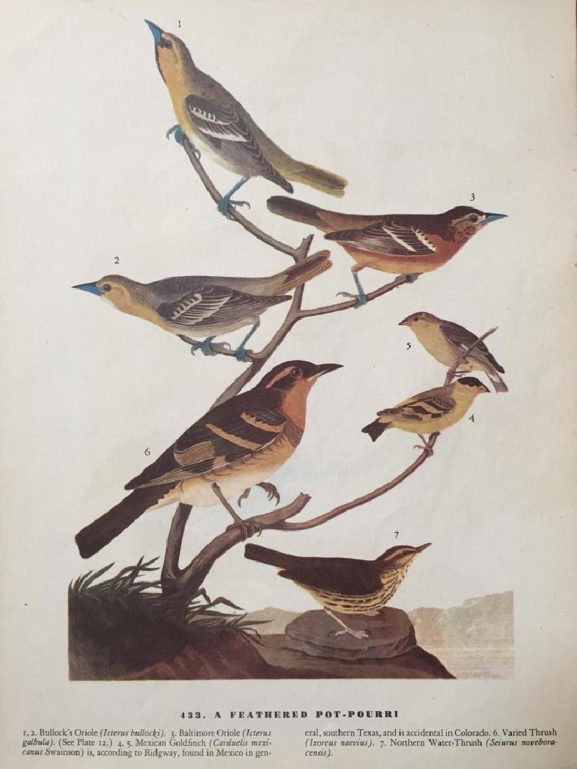 c1946 Audubon Print, #433 A Featured Pot-Pourri - 2
