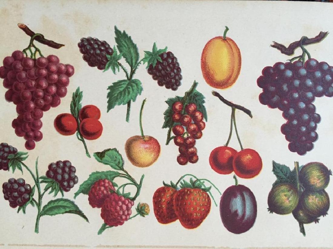 19thc Chromolithograph Print, Fruit