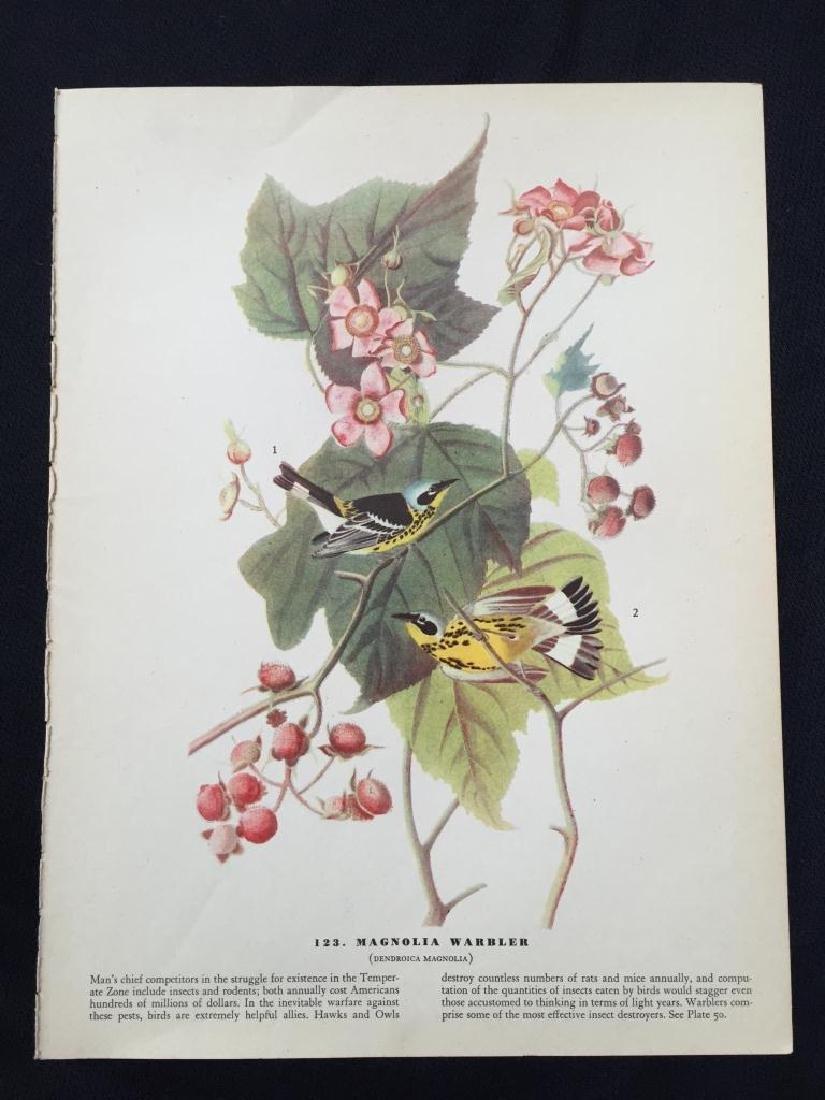 c1946 Audubon Print, #123 Magnolia Warbler - 2