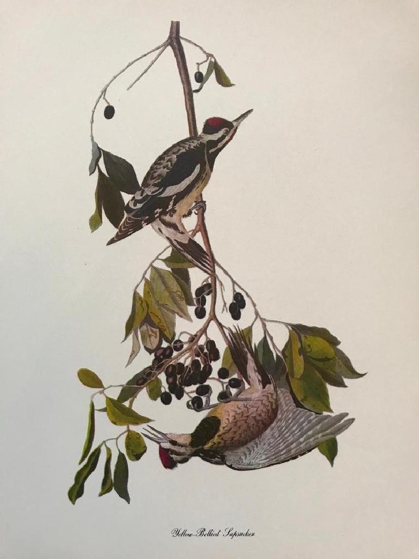 c1950 Audubon Print, #190 Yellow-Bellied Sapsucker