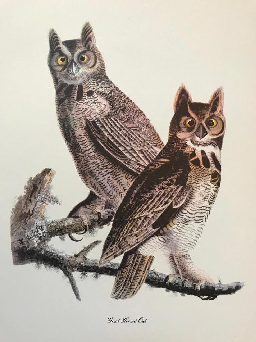 c1950 Audubon Print, Great Horned Owl