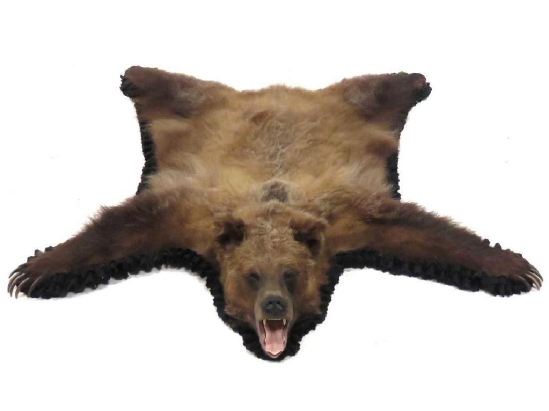 """Brown Bear Skin Rug With Head And Claws. 65 X 61"""""""