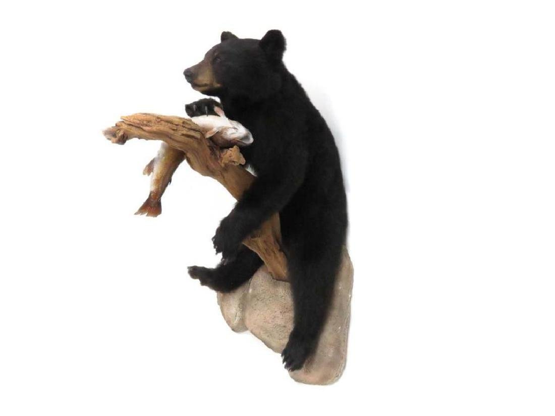 Full Body Black Bear With Fish Trophy Wall Mount - 2