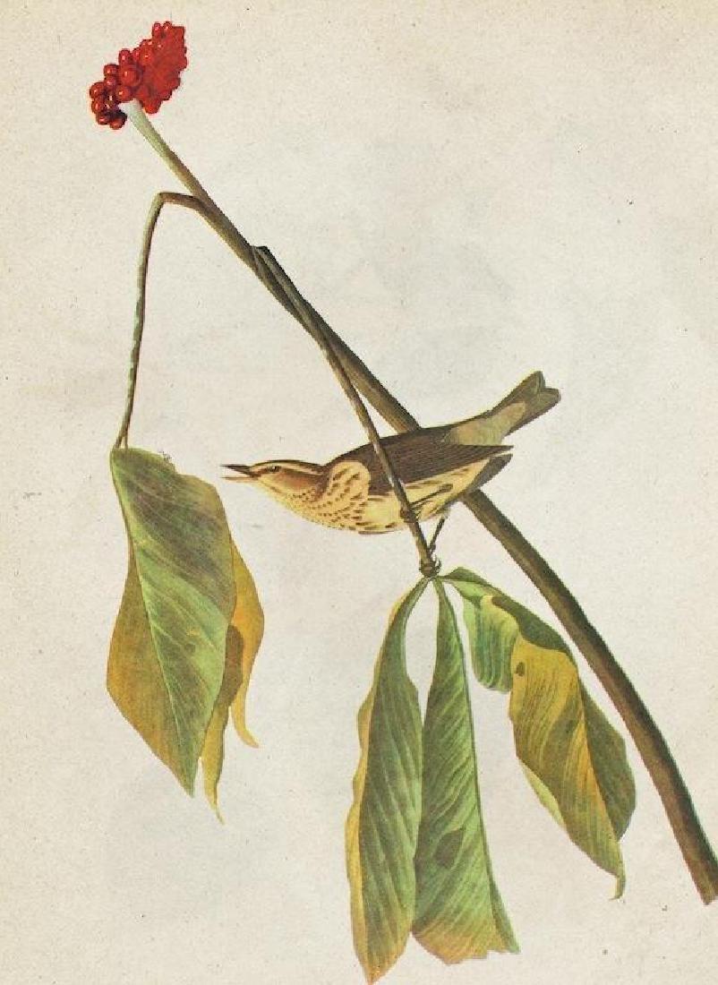 c1946 Audubon Print, #19 Louisiana Water Thrush