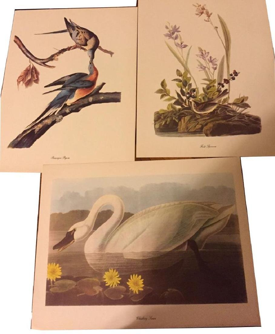 50 Audubon Birds Of America Prints With Commentaries -