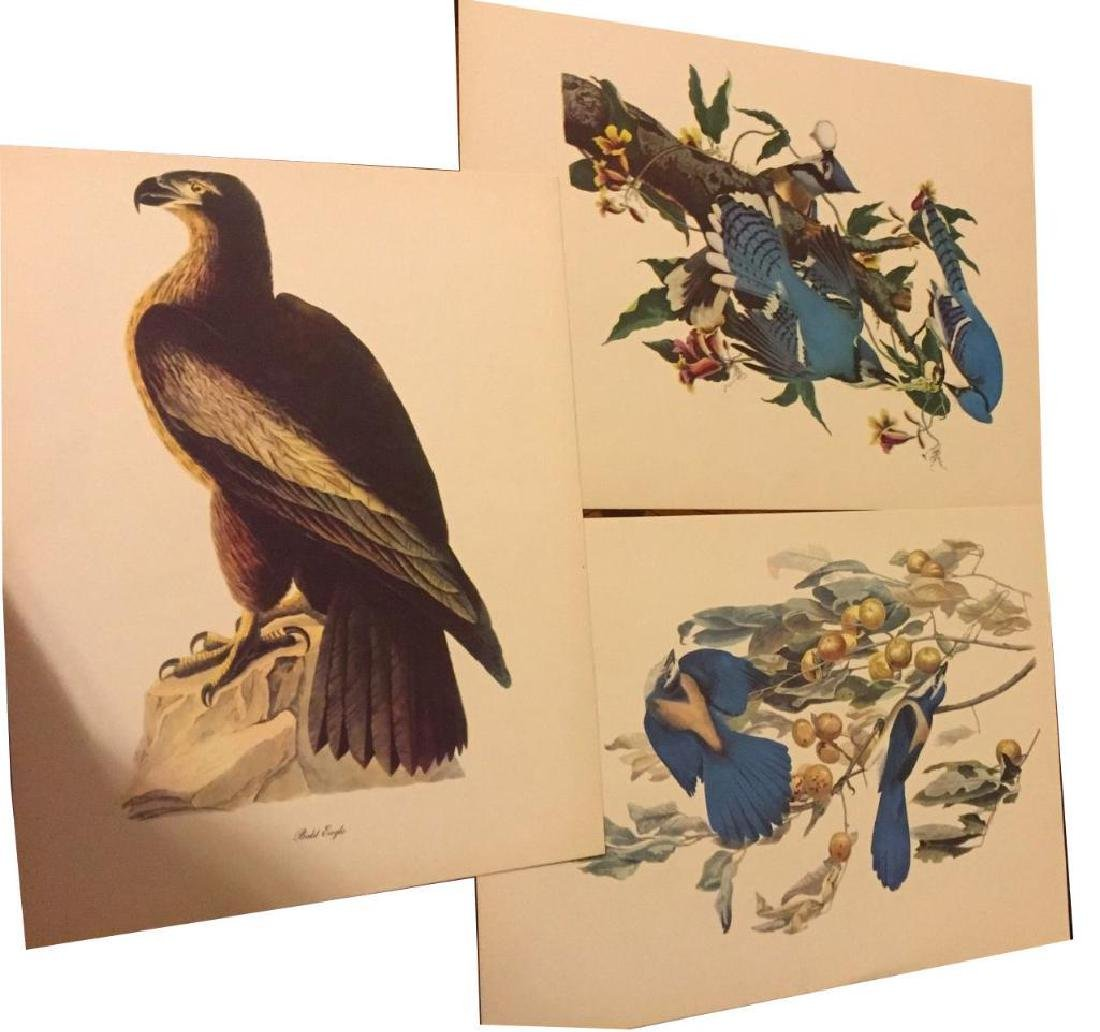 50 Audubon Birds Of America Prints With Commentaries - - 2