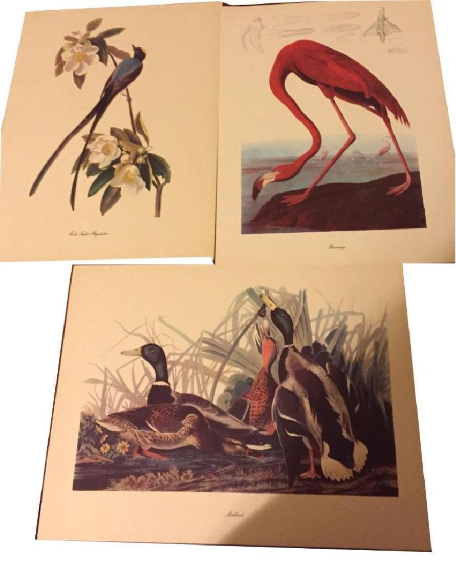 50 Audubon Birds Of America Prints With Commentaries - - 3