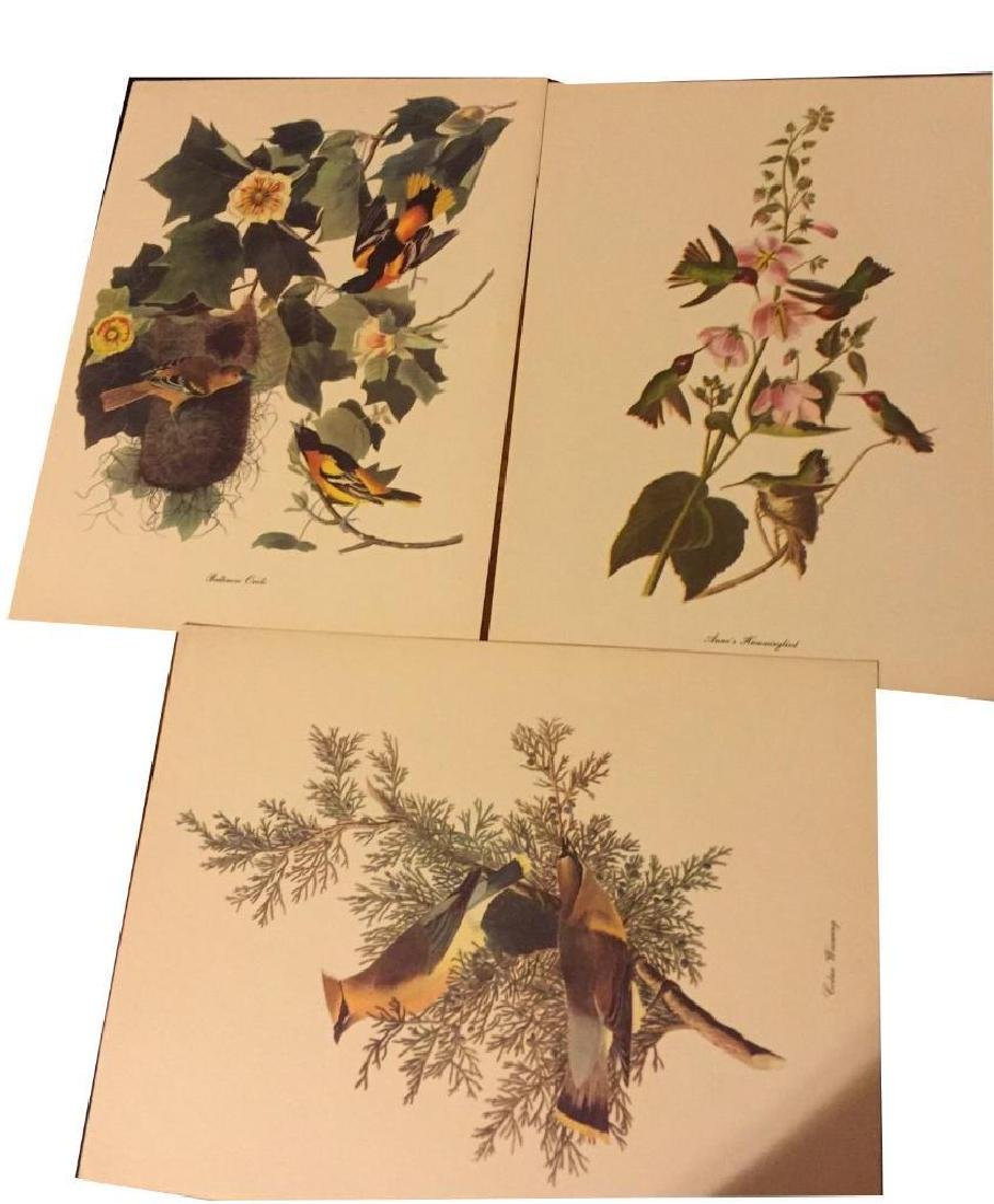 50 Audubon Birds Of America Prints With Commentaries - - 4