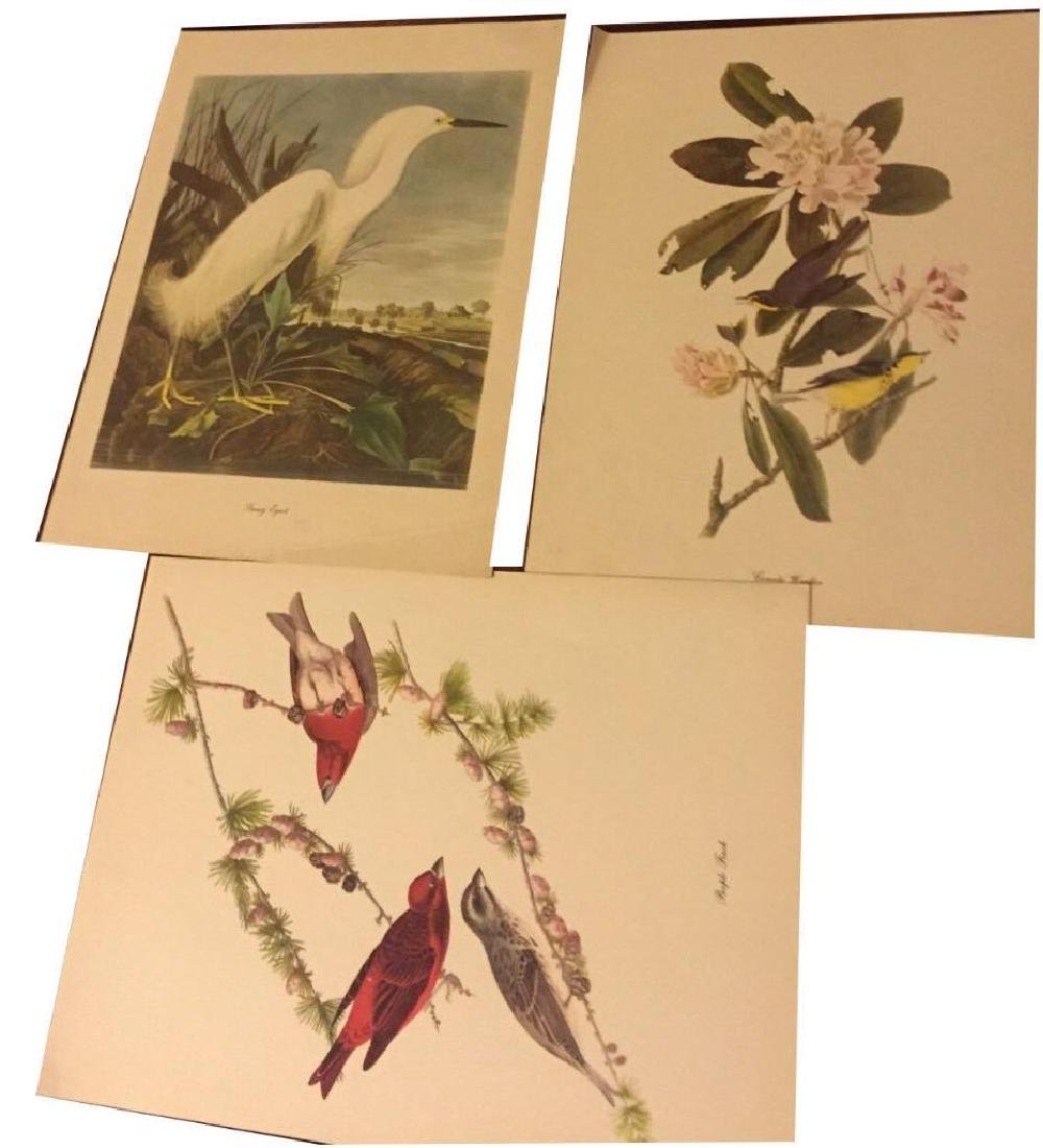 50 Audubon Birds Of America Prints With Commentaries - - 5