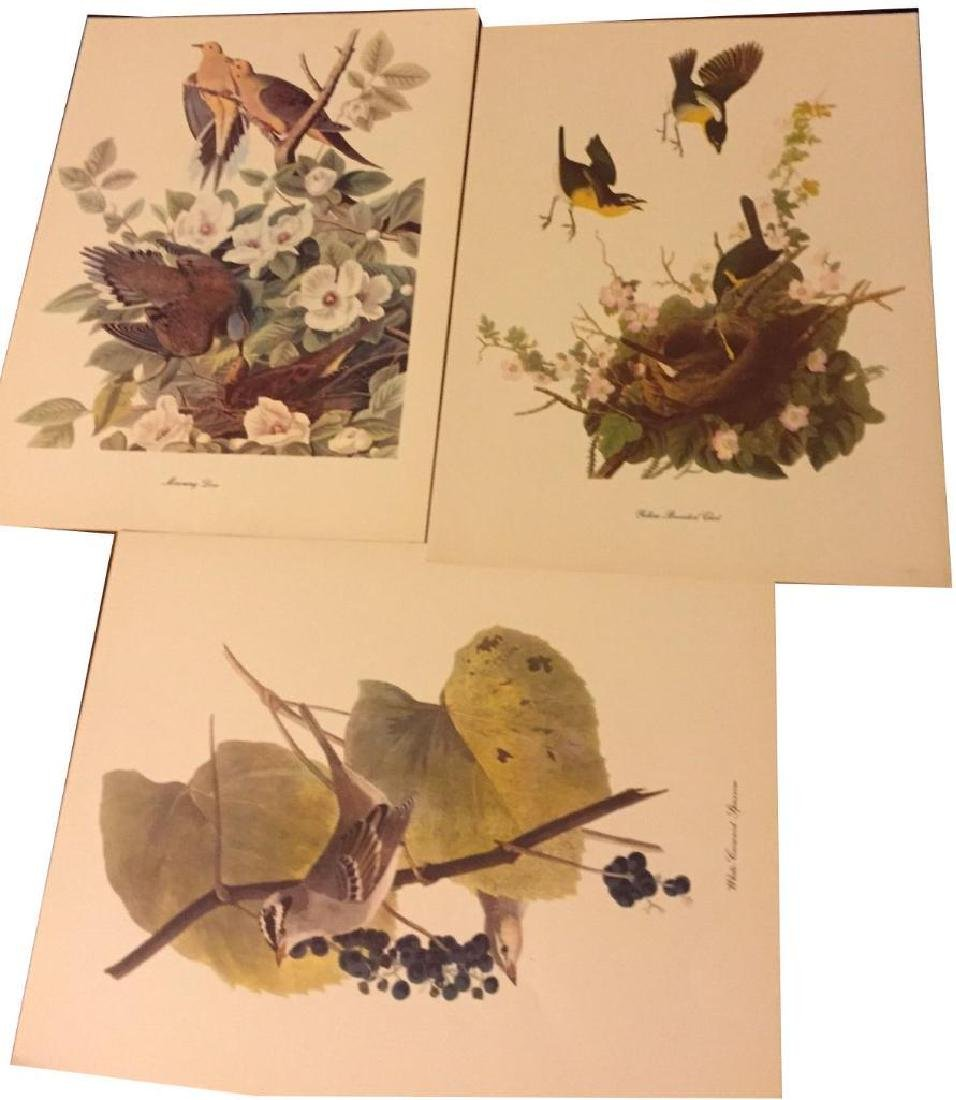 50 Audubon Birds Of America Prints With Commentaries - - 6