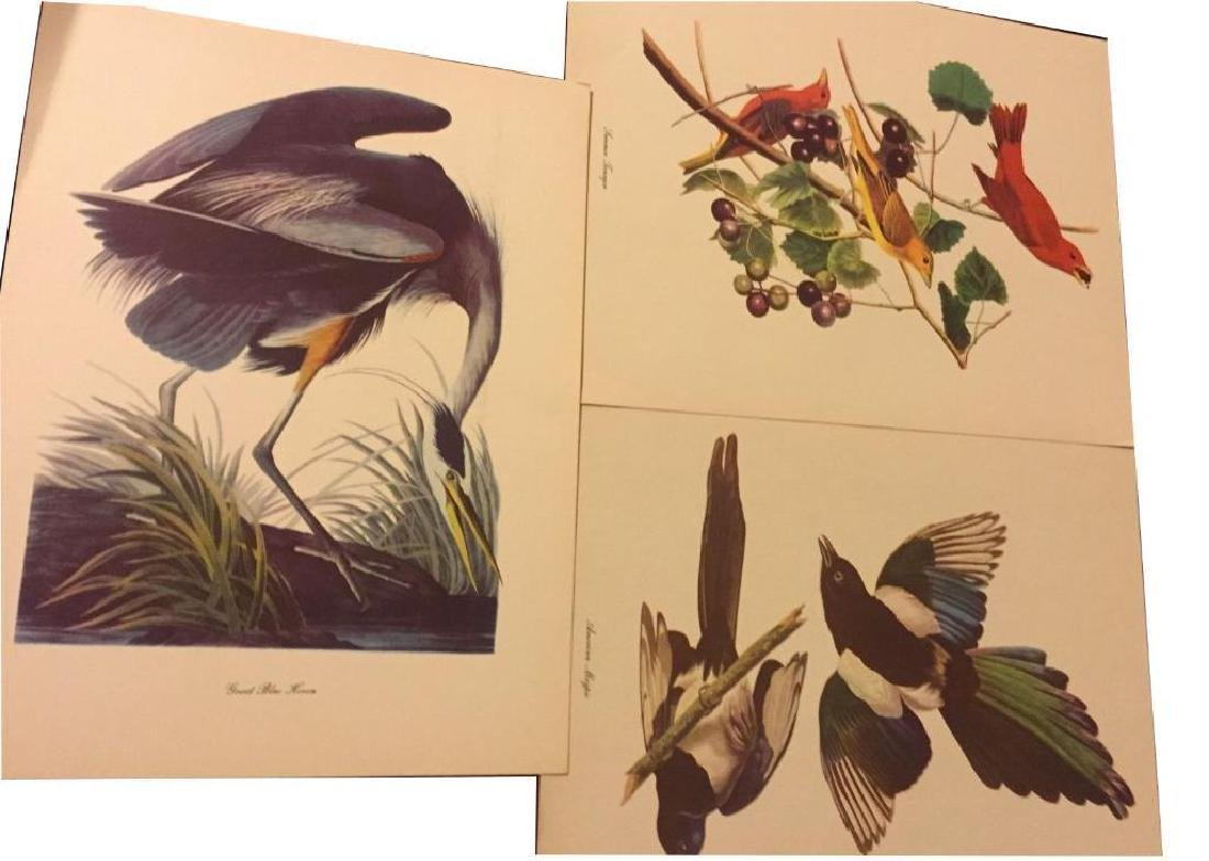 50 Audubon Birds Of America Prints With Commentaries - - 7