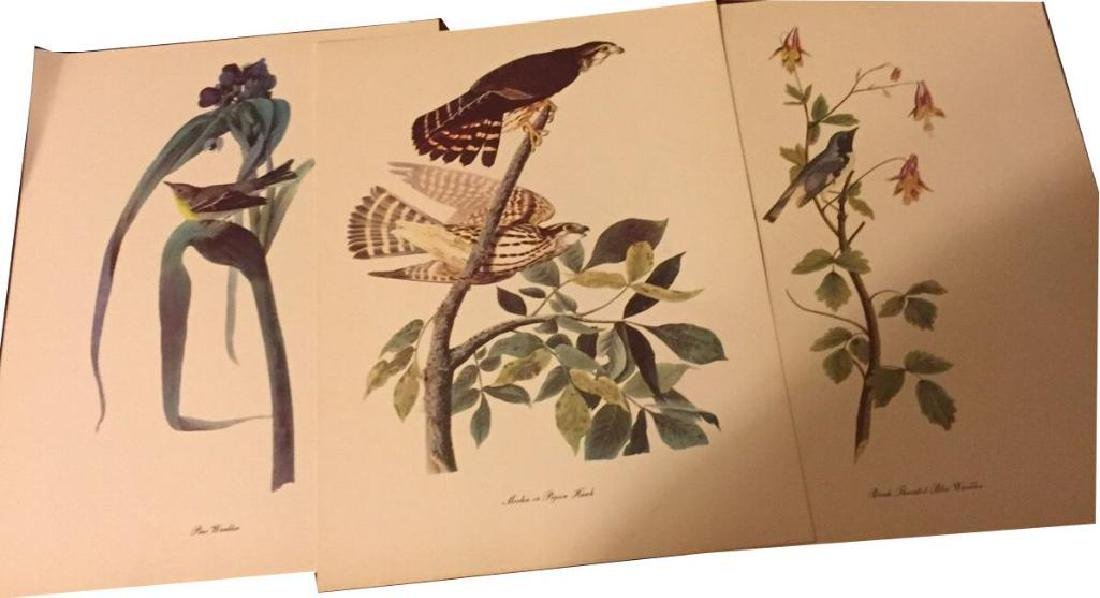50 Audubon Birds Of America Prints With Commentaries - - 8