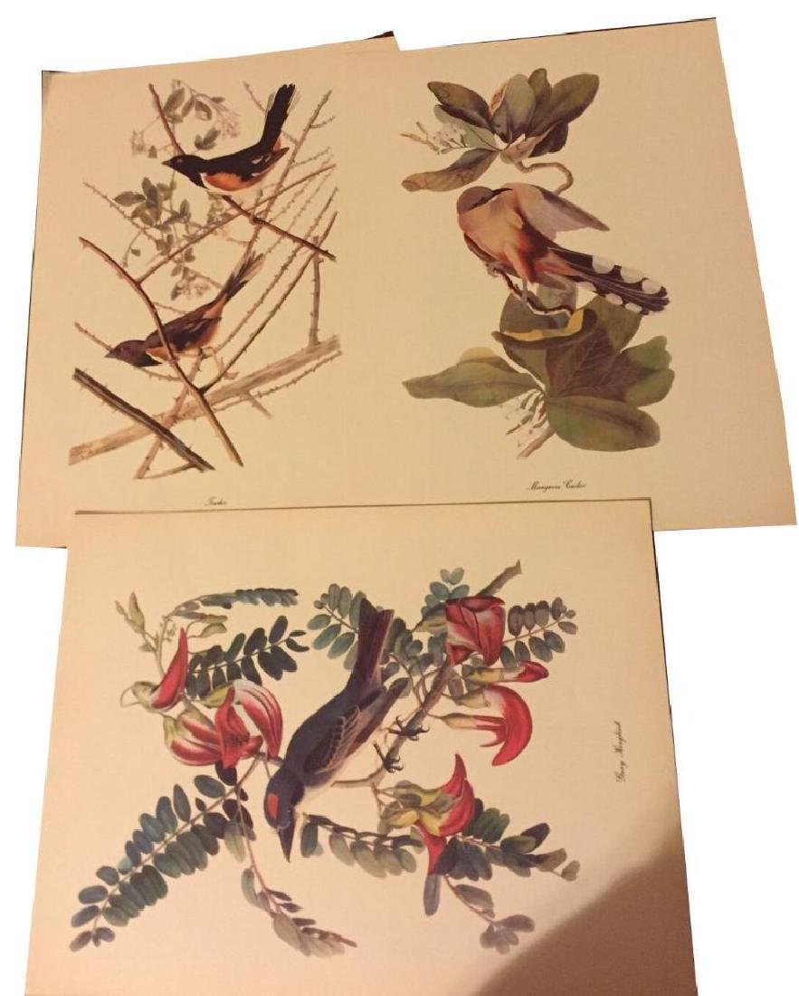 50 Audubon Birds Of America Prints With Commentaries - - 9