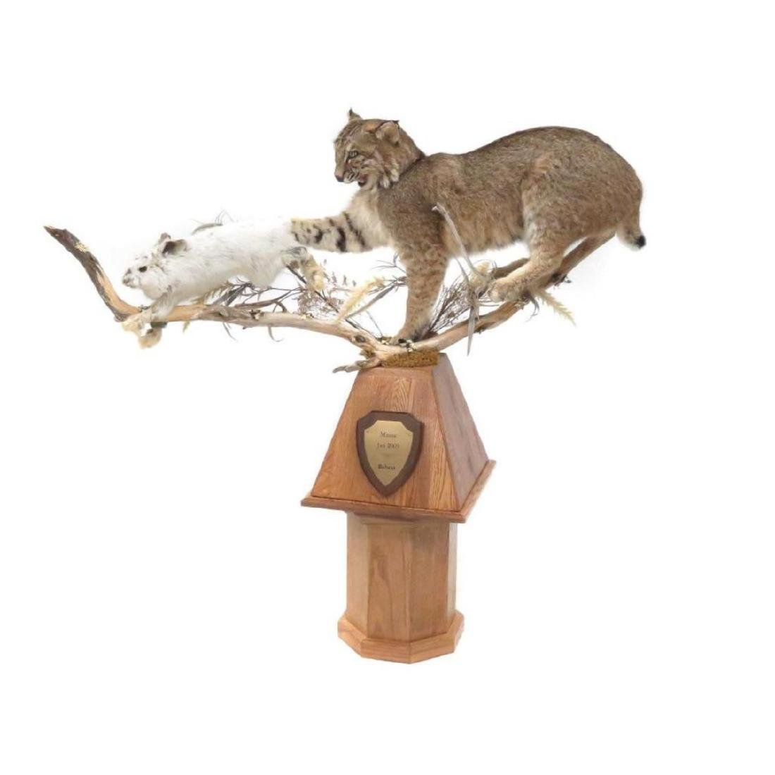 Maine Bobcat & Hare, Full Body Trophy Mount With Oak - 2