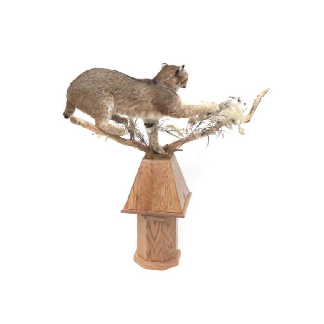Maine Bobcat & Hare, Full Body Trophy Mount With Oak