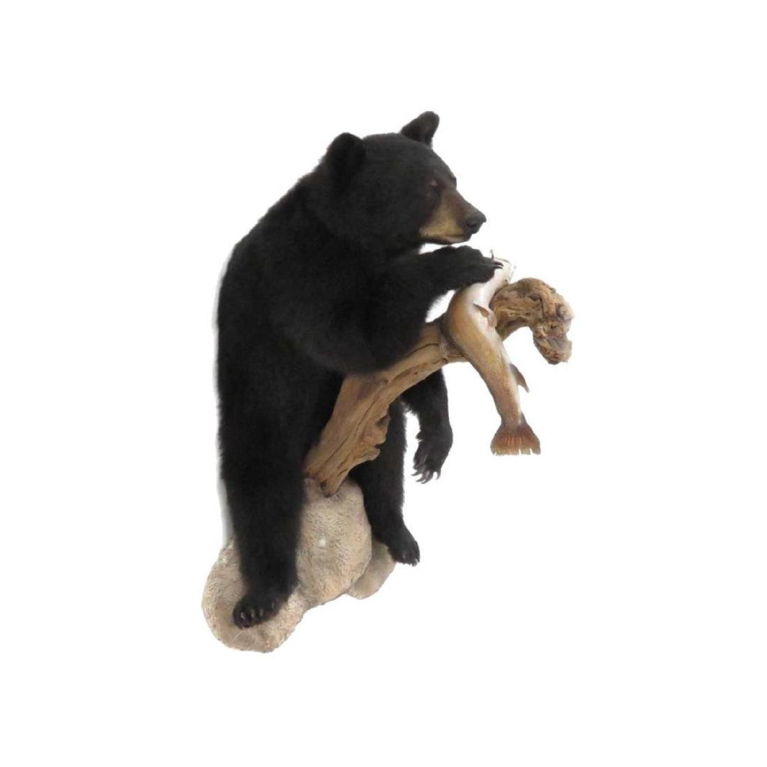 Full Body Black Bear With Fish Trophy Wall Mount