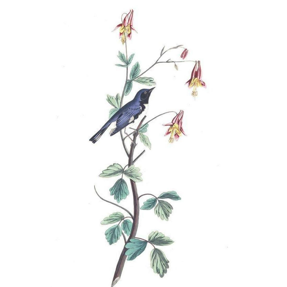 c1946 Audubon Print #155 Black-Throated Blue Warbler