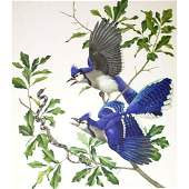 1950 Menaboni Print, Blue Jay