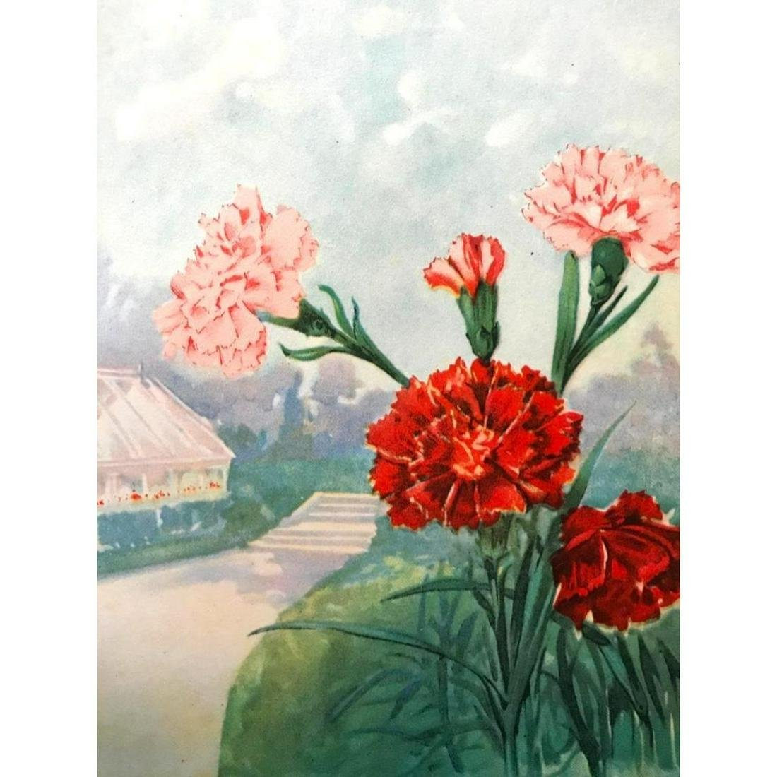 1920's Carnation Color Lithograph Print