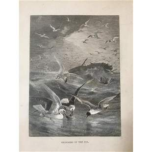 19thc Engraving Gleaners Of The Sea