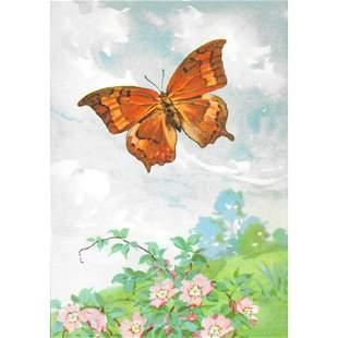 1920s Goatweed Emperor Butterfly Color Lithograph