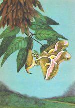 1920s Cynthia Moth Color Lithograph Print