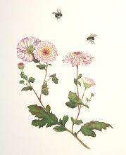 Limited Edition Print Bumble Bees and Chrysanthemums
