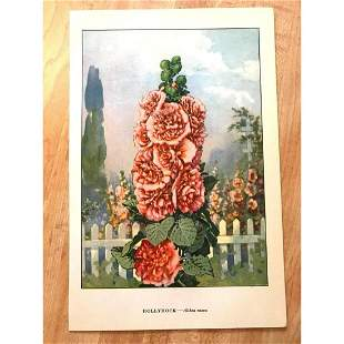 1920s Hollyhock Color Lithograph Print