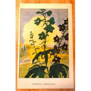 1920s Delphinium Color Lithograph Print