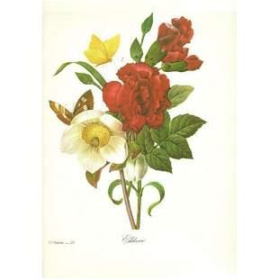 After PierreJospeh Redoute Floral Print 35 Ellebore