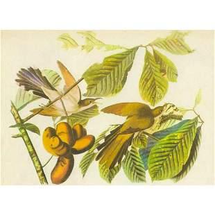 c1946 Audubon Print 2 YellowBilled Cuckoo