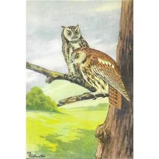 1920s Screech Owl Color Lithograph Print