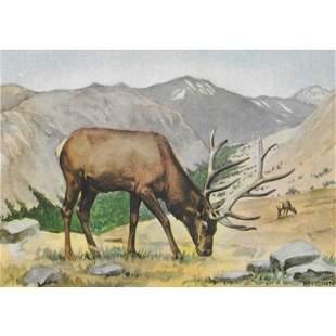 1920s Elk Color Lithograph Print