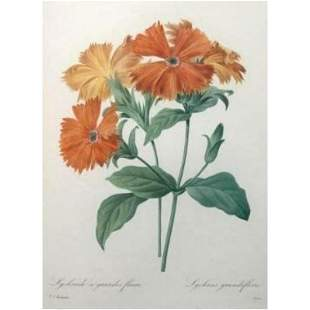 After Pierre-Jospeh Redoute, Floral Print, #75 Lychnide