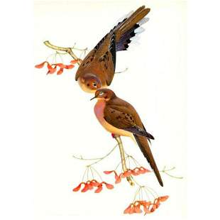1950 Menaboni Print, Eastern Mourning Dove
